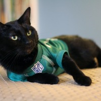 NFL Pet Jersey + Giveaway