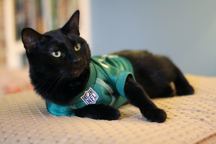 Little Earth Production NFL Pet Jersey